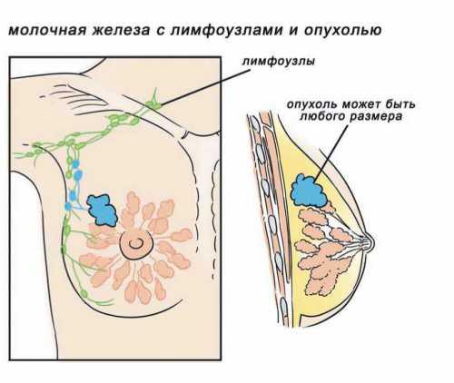 Другие белки или химические соединения, которые есть в теле, могут прикрепляться к этим рецепторам, чтобы провести изменение внутри клетки например, спровоцировать ее восстановление или воспроизводство