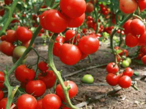 РАЗГРУЗОЧНЫЕ ДНИ на сырых овощах и фруктах