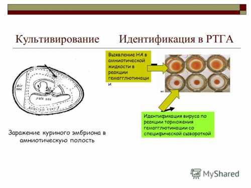 Вирусные инфекции на цветочных культурах