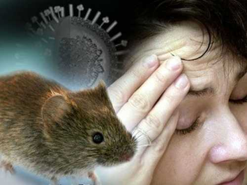 Мышиная лихорадка у мужчин: симптомы, причины,