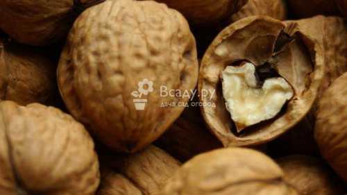 Польза грецкого ореха для женщин, лечебные